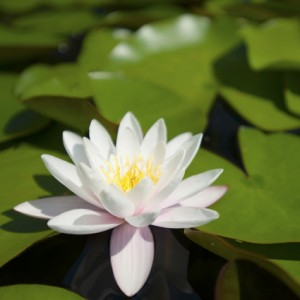Ethics in Yoga: Yamas & Niyamas @ Yasodhara Ashram