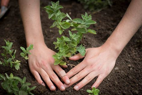 intentions-planting-hands-soil-seeds