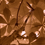 forgiveness orange nested leaves