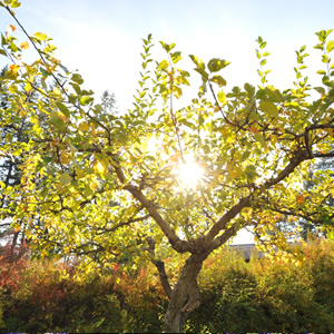 Solstice Retreat: Renewing in the Light @ Yasodhara Ashram